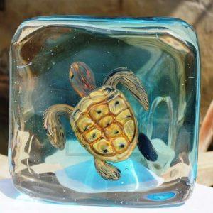 Murano Aquarium and Sea Life