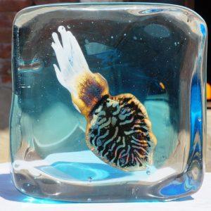Murano Cuttlefish